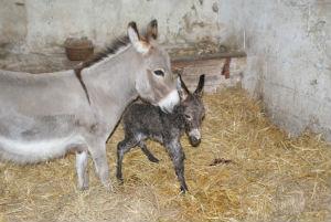 naissance anons miniature