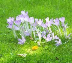 plantes toxiques ane miniature